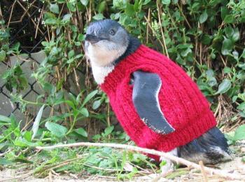 Pingvin med genser